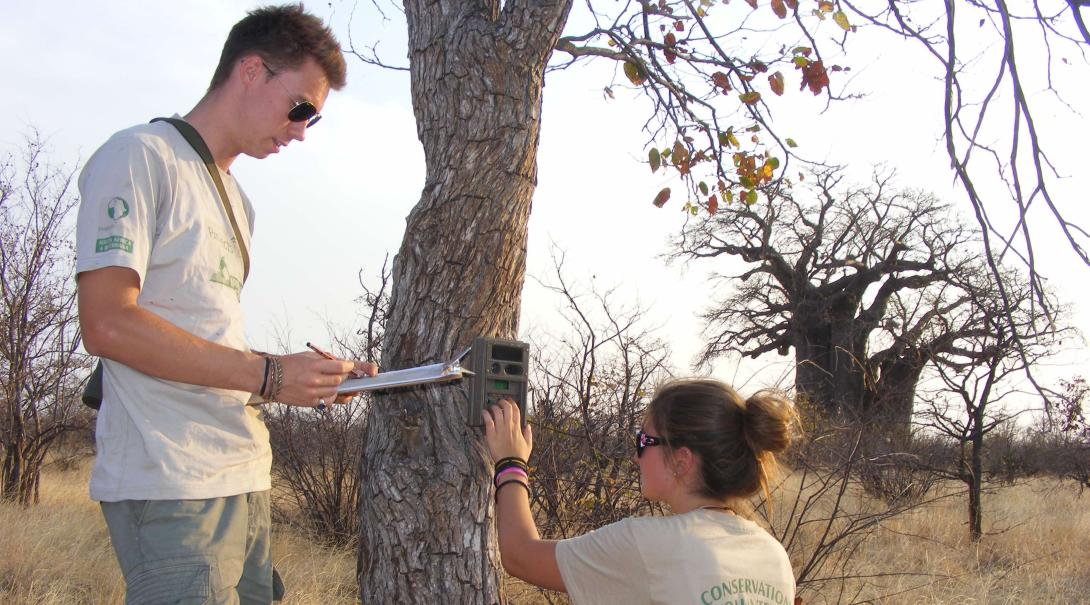 Volunteers in Botswana help setting up camera traps.